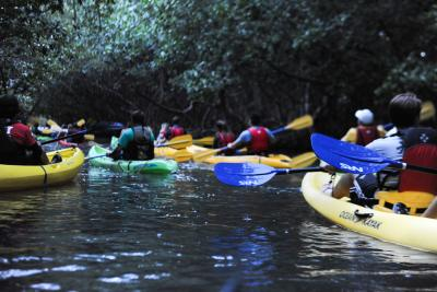 picture of a group of people kayaking in a river in Puerto Rico